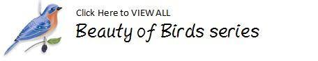 2013 of birds cedar waxwing hallmark ornament