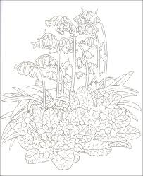 forest color coloring book 041424 details rainbow