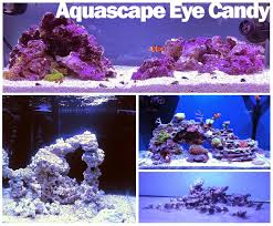 Reef Aquascape Designs Top Reef Tank Aquascapes Current Tank Info 30x30x18 70 Gallon