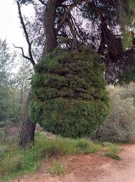 i found an tree imgur