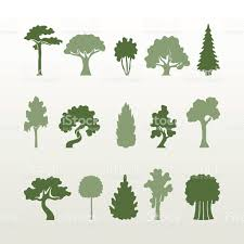different types of trees different types of trees vector stock vector art more images of
