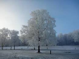 magical frosty tree picture of forest holidays forest of dean