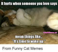 Mean Cat Memes - 25 best memes about funny cat meme funny cat memes