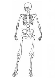 human skeleton coloring u2013 defenderauto info
