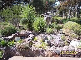australian native garden plants garden adrian kuys