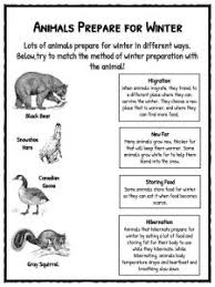 winter facts information u0026 worksheets for kids teaching resource