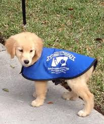 Training A Guide Dog For The Blind Best 25 Guide Dog Training Ideas On Pinterest Dog Training Tips