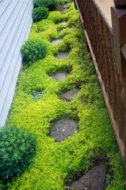 Best 10 Small Backyard Landscaping by Best 25 Ground Covering Ideas On Pinterest Flowering Ground