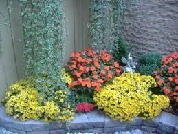 imagenes de jardines pequeños con flores plantas para jardines pequeños www plantasyjardines es
