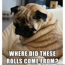 Where Memes Come From - where did these rolls come from pug memes and comics