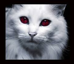 when ic is released will we finally be able to kill cats u2014 elder
