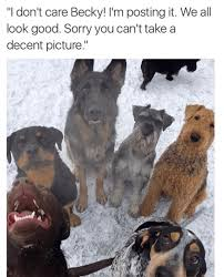T Dog Meme - funny dog memes there s always one facebook