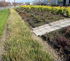 bioswales and rain gardens the right way turf