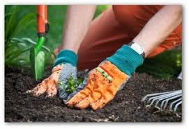 making a vegetable garden in your backyard