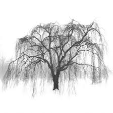 weeping willow tree black and white drawing clipartxtras