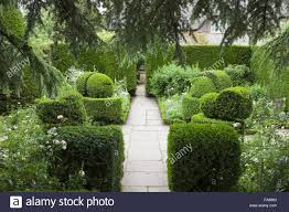 English Box Topiary - the white garden with yew hedges and box topiary at hidcote stock