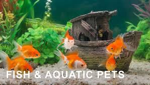 amazon black friday pet sales amazon ca pet supplies