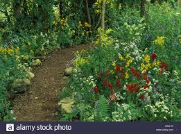 midwest native plants peaceful path in shady native wildflower garden midwest usa stock
