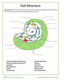 prentice biology test generator 28 images holt biology cell