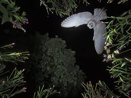 Barn Owl Photography The Story Behind An Incredible Shot Of An Owl In Flight