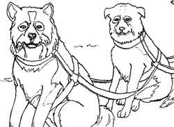 alaska coloring sled dogs coloring coloring