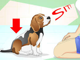 how to train dog to stop barking how to keep your dog calm outside his crate 13 steps