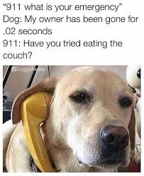 Dog Doctor Meme - dopl3r com memes 911 what is your emergency dog my owner has