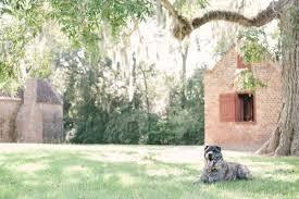 In Loving Memory Dog Tags In Loving Memory Tank Daily Dog Tagdaily Dog Tag
