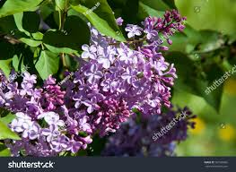 types of purple 86 beautiful purple flowers pictures best 25 purple flowers