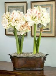 Silk Amaryllis Flowers - 58 best amaryllis images on pinterest flowers marriage and