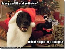 Christmas Dog Meme - 310 best black dog runs disney images on pinterest black dogs dog