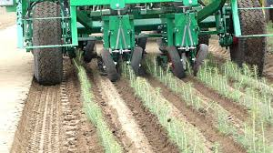 automatic transplanter for pine tree