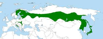 Ural Mountains On World Map by Ural Mountain Range