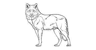 draw how to draw a wolf step by step