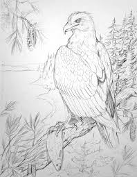 featherseeds bald eagle thesis sketch