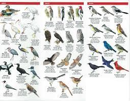 identifying backyard birds outdoor goods