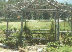 rustic garden structures pergolas wouldn u0027t this look great