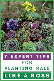 234 best best of gardening images on pinterest gardening plants