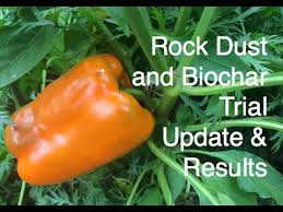 Rock Dust Gardening Do Rock Dust And Biochar Increase Tomato And Kale Production Home