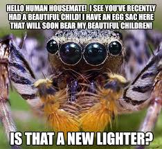 Cute Spider Meme - poor misunderstood house spider the meta picture