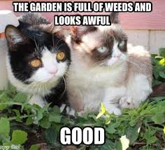 Good Grumpy Cat Meme - top 35 grumpy cat memes cutest cats