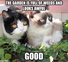 Tard The Cat Meme - top 35 grumpy cat memes cutest cats