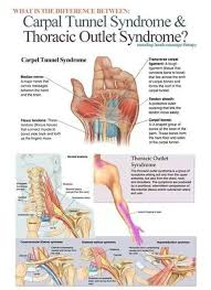 Beauty Therapy Anatomy And Physiology 19 Best Beauty Level 2 Images On Pinterest Human Anatomy