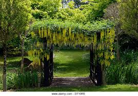 Plants For Pergola by Ideas For Climbing Plants Please But Not Clematis Tes Community