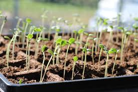 get a jump on spring with seed starting kaufman county master