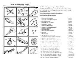 protist dichotomous key worksheet activity the biology classroom