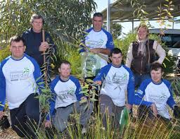 toyota branches tree day branches out for its 20th year the murray pioneer