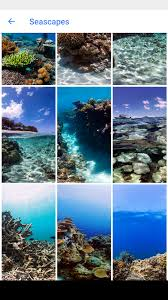 ocean explore wallpapers google makes it easy to explore seascapes on your phone in