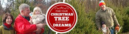 hidden pond tree farm where christmas grows all year long