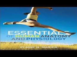 Human Anatomy And Physiology Marieb Hoehn Human Anatomy And Physiology Marieb 10th Edition Citation